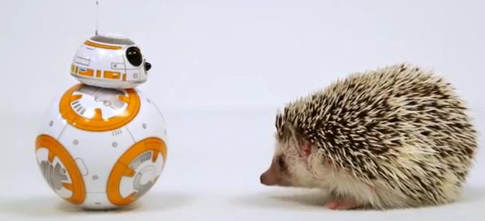 Star Wars: The Force Awakens - BB-8 y erizo