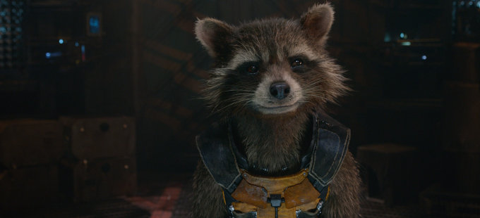 Fallece Oreo, el mapache detrás de Rocket Raccoon en Guardians of the Galaxy